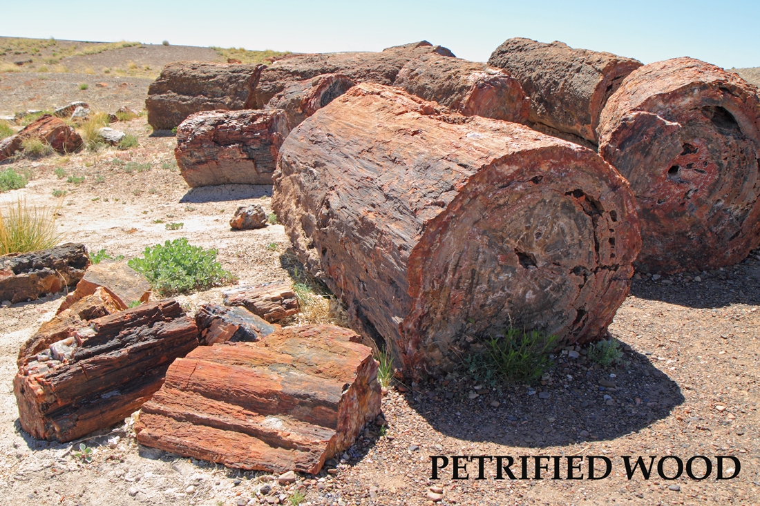 Petrified Wood 1100x